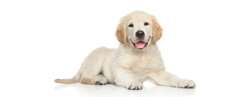 Pet care 520 Products at the Best Prices to Buy on Selfpharma